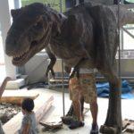 福井県立恐竜博物館へ行ってきました♪ 3