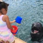 メダカは大きくなったらクジラになる!
